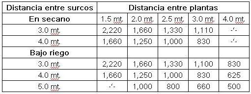 tunas_distancia_entre_plantas